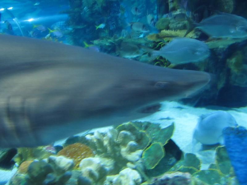 Tropikárium- stretávka so žralokom- našťastie bol už najedený 